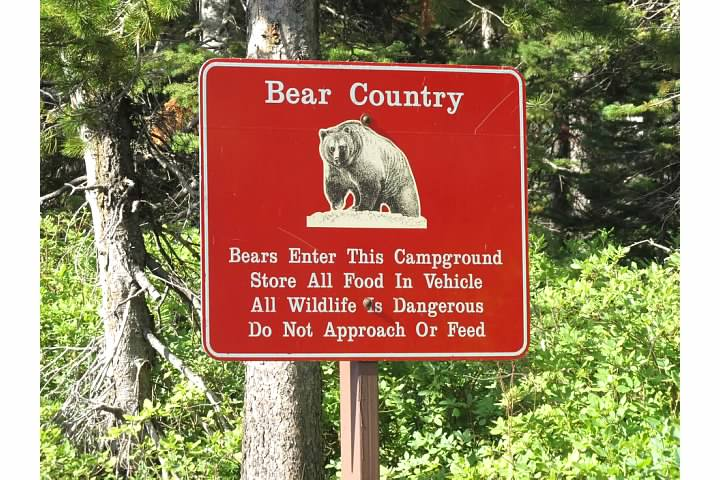 Judging from the fact that the park's advice is to store food in vehicles, it seems Glacier's bears aren't quite as much as a nuisance as Yosemite's, where that would be bad advice indeed