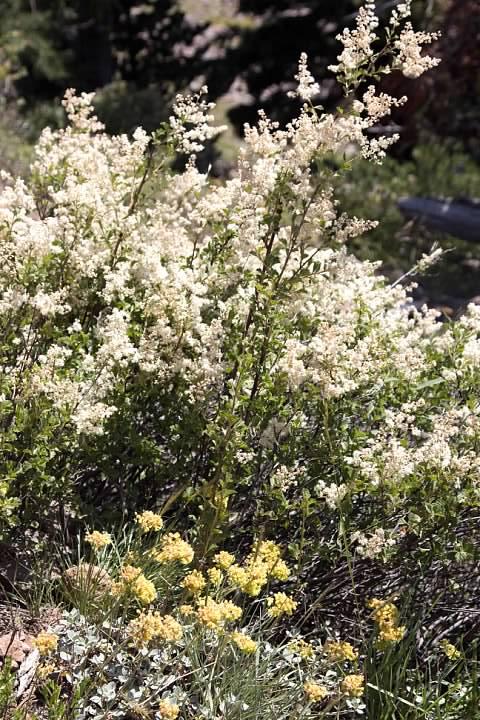 Wildflowers on Garfield Peak