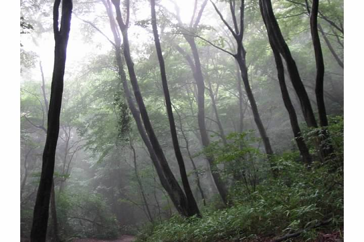 Misty forest on Daimonji-yama