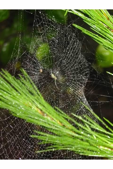 Spider web near the summit