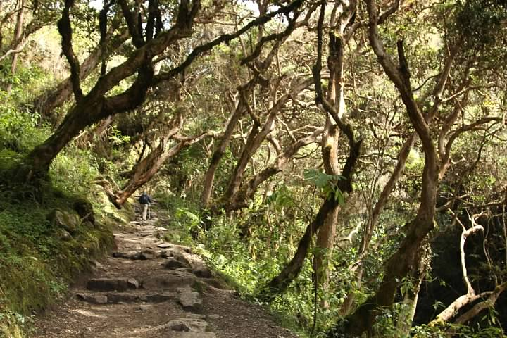 The Inca Trail passes through the cloud forest