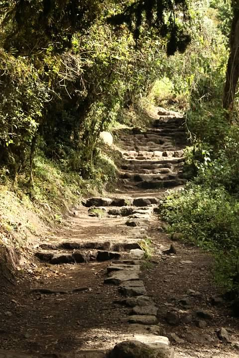 Inca Trail passing through the cloud forest