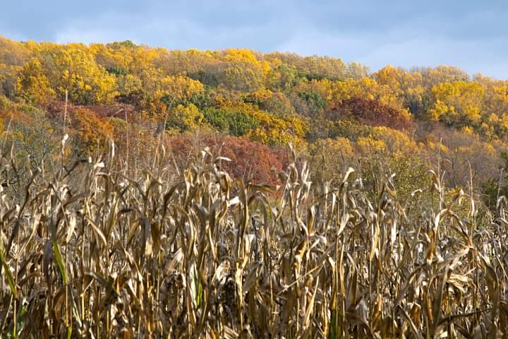 Colors on a hillside overlooking a cornfield at the Woodlawn Tract, now part of First State National Historic Park. 30 October 2014