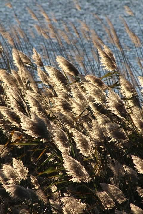 Marsh plants, 7 November 2014