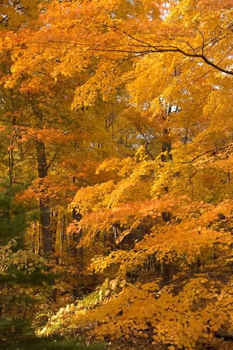 25 Foliage Near Zoo