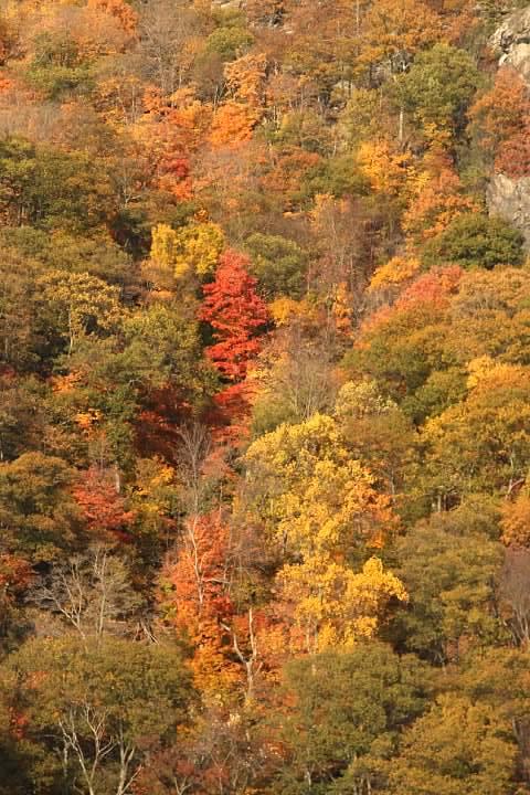 27 Foliage along Hudson