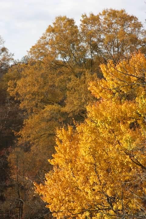 Fall colors, 2 November 2013