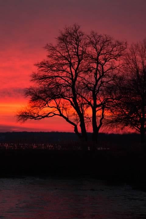 16 The Tree Sunset