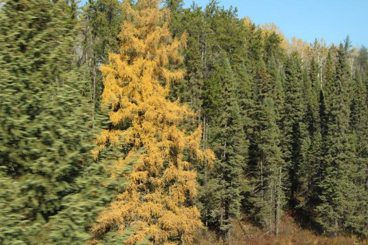 Yellow-among-Green