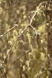 10b Branch Detail