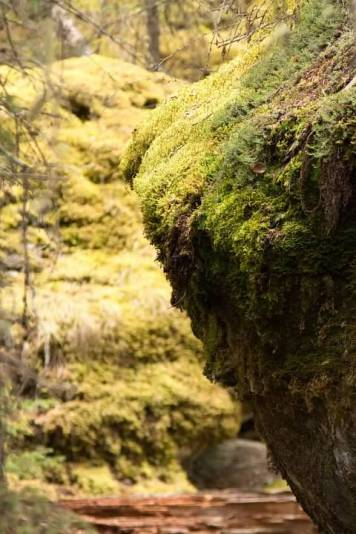 10c Moss Rock