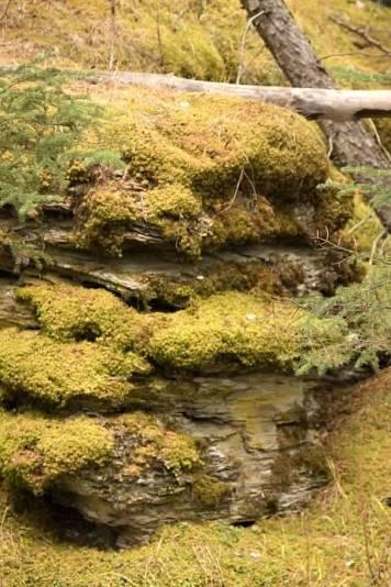 10d Moss Rock