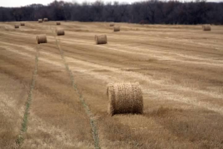 7 Fields