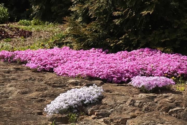 13 Rocky Flowers