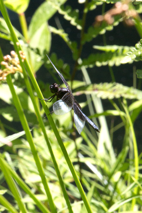7July720Dragonfly