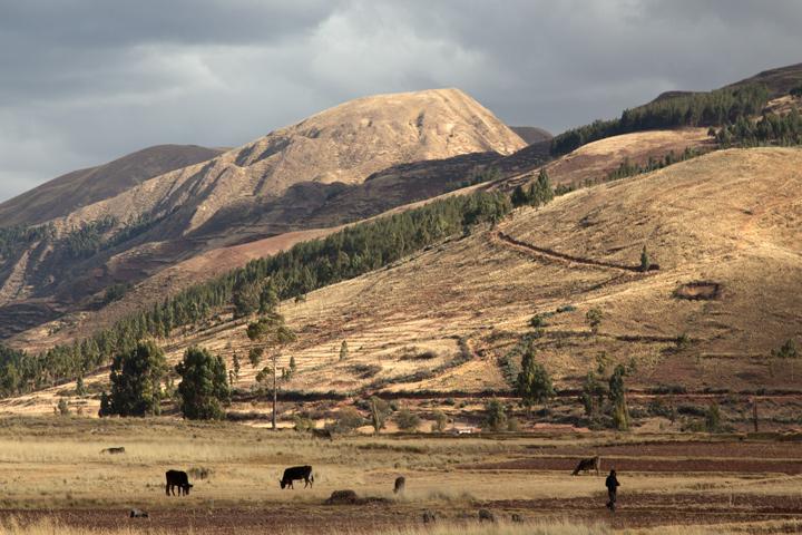 AndeanExplorerColor